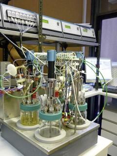 Eine Laborfermentationsanlage, in der die Umsetzung durch die Hefe durchgeführt wird. Alle Fotos: Universität für Bodenkultur Wien, Department für