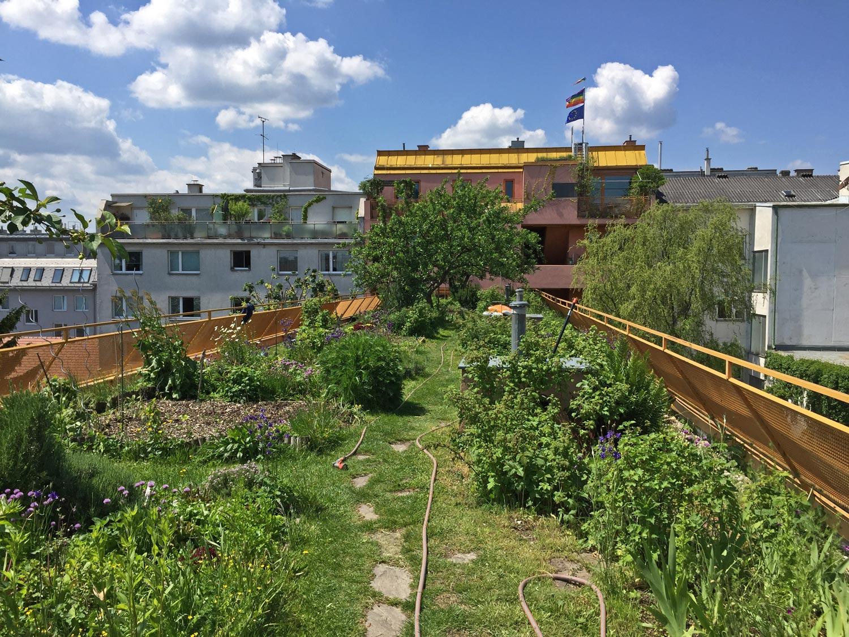 Dachbegrünung mit urban gardening, Sargfabrik, Wien, Foto: GRÜNSTATTGRAU