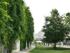 Grüne Infrastruktur, Viertel Zwei, 1020 Wien, Foto: Waldhör KG