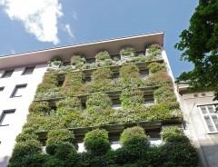 Begrünte Fassade, 1150 Wien, Foto: Waldhör KG